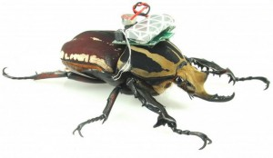 жуки-киборги